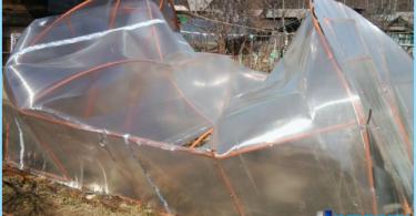 De efecto invernadero de policarbonato con sus manos