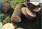 Cuidado del césped: el peinado, la aireación, la fertilización, el acolchado, la siega